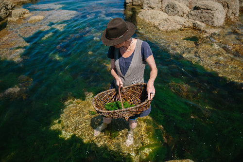 seaweed foraging cookery