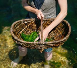 edible-seaweed-cornwa
